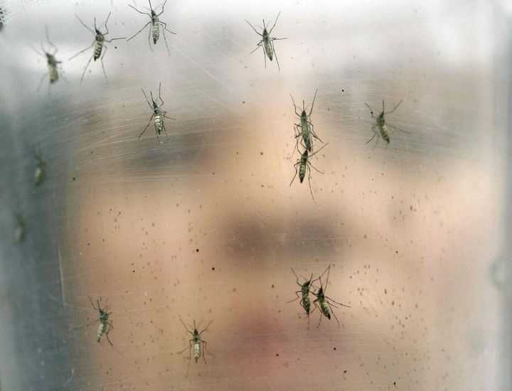 The Tiger Mosquito arrives in Spain